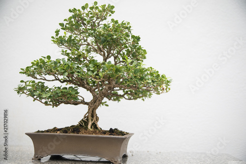 Photo Stands Bonsai Bonsai Tree