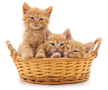 Three Red Kittens In A Basket.