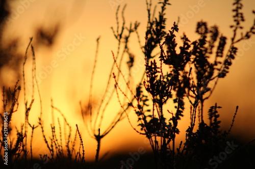 Fototapeten Natur Zonsondergang oranje lucht