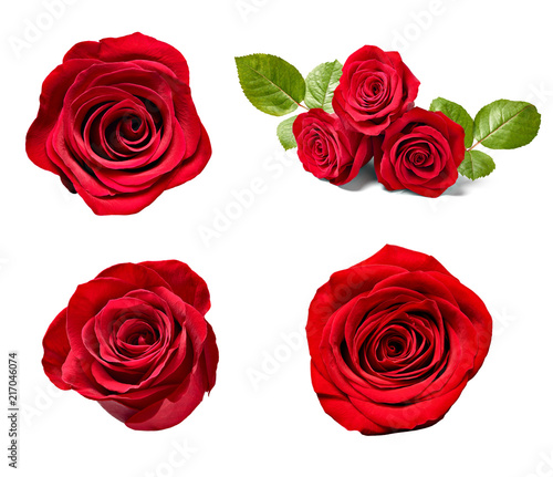 Recess Fitting Roses flower rose petal blosspm background