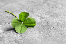 Green Four-leaf Clover On Gray Background With Space For Text
