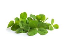 Green Clover Leaves On White B...