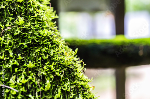 Printed kitchen splashbacks Cemetery green moss In the Forest background