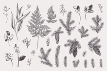 Set With Winter Plants.