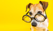canvas print picture - Smart dog in glasses on yellow backgeound. Horizontal banner. Back to school theme. Funny lovely pet