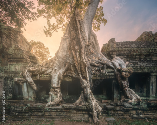 gigantyczny-drzewo-ta-prohm-swiatynia-w-angkor-kambodza