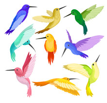 Flat Vector Set Of Hummingbird...