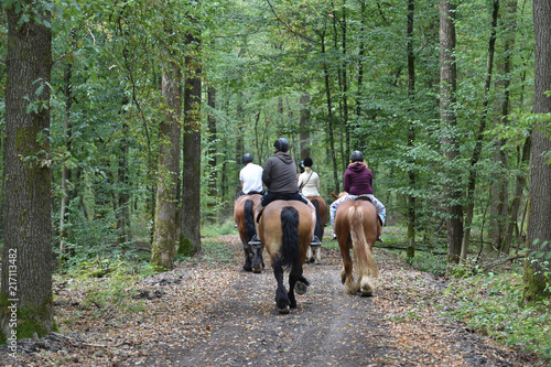 Obraz na plátne chevaux équitation hippotherapie balade foret