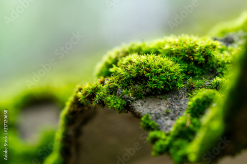 Moss on a tree in the forest Wallpaper Mural