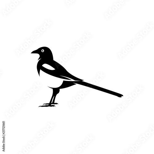 Obraz na plátně magpie silhouette