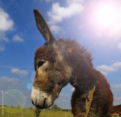 In de dag Ezel Donkey in a Field in sunny day