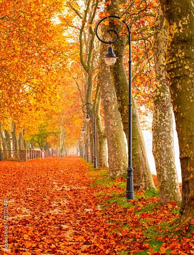 Foto op Canvas Herfst Nice autumnal urban scene