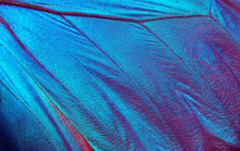 Butterfly Wings Texture Background. Detail Of Morpho Butterfly Wings.