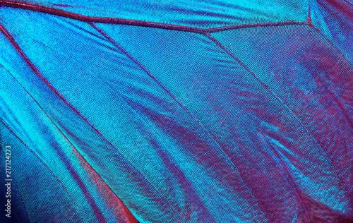 Fotografie, Obraz  Butterfly wings texture background