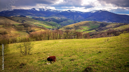 Deurstickers Honing Landscape with sheep in the Carpathians
