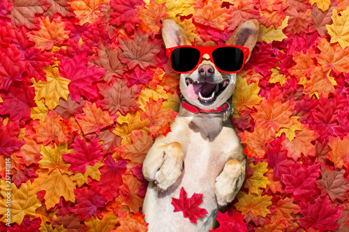Keuken foto achterwand Crazy dog autmn fall leaves dog