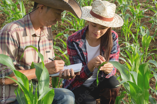 Fototapeta Two agricultural researchers are studying the growth of corn plants. obraz