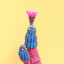Fashion Cactus With Flower In ...