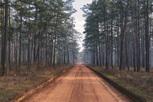 Longleaf Pine Forest And Clay ...