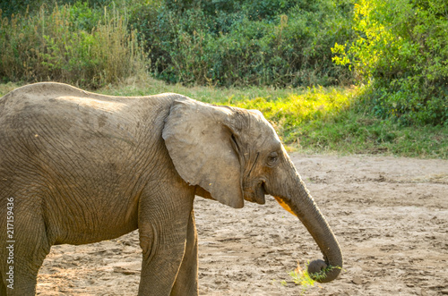 Foto op Aluminium Olifant Baby elephant
