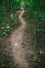 A Curving Dirt Path Through The Woods