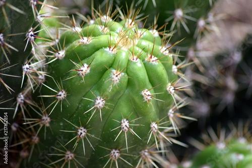 Tuinposter Cactus Cactus