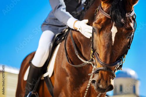 Fotografía  Worried equestrian