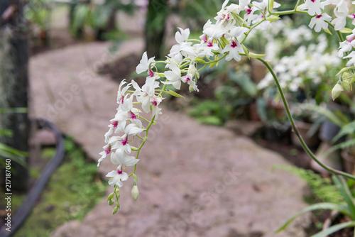 Foto op Plexiglas Bloemen Surprising in their beauty, flowering multicolored orchids grow in the orchidarium.
