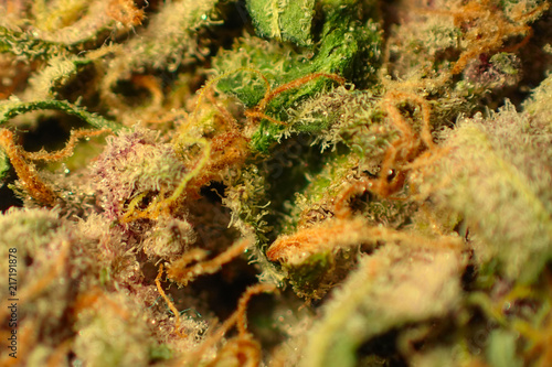 Foto auf Gartenposter Forest river Close up macro shot of cannabis buds covered in thc crystals.