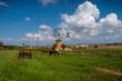 Mallorca Mühle mit Pferden