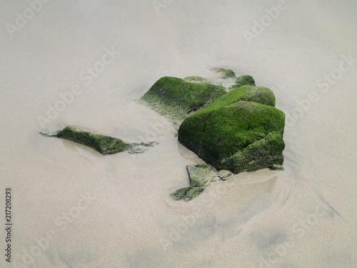 Poster Chamaleon pustynia piasek
