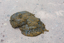 Cow Dung, Manure Lies On The Asphalt Background