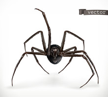 Realistic Spider, Halloween 3d Vector Icon
