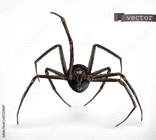 Leinwand Poster Realistic spider, Halloween 3d vector icon