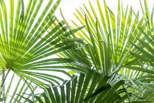 Wall Murals Tropical leaves closeup palm tree leaf