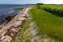 Currituck Sound Shoreline Along Hatteras Island In The Outer Banks Of Avon, North Carolina