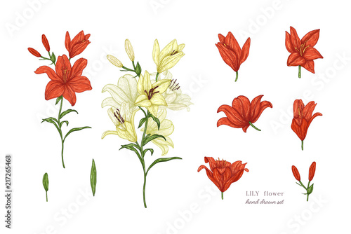 Leinwand Poster Set of lily flowers in color