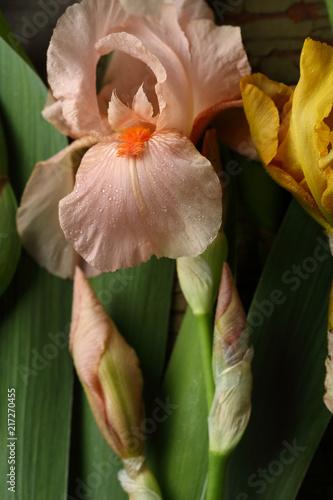 Spoed Foto op Canvas Iris Pink iris flowers