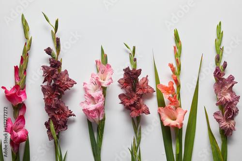beautiful pink and violet gladioli flowers on grey background Billede på lærred