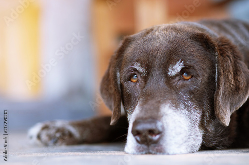 The dog sleeps sad waiting in front of the house Canvas Print