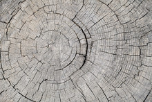 Texture Of Rough Surface Felled Tree Weathered With Annual Rings. Concept Of Long Life Longevity Aging. A Background With Copy Space Of Gray Stump Wood