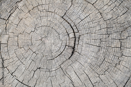 Papiers peints Texture de bois de chauffage Texture of rough surface felled tree weathered with annual rings. Concept of long life longevity aging. A background with copy space of gray stump wood