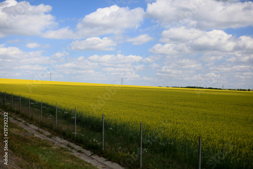 In de dag Bleke violet Beautiful landscape of agricultural fields of Russia. Rapeseed field in summer, Blooming canola flowers. Bright Yellow rapeseed oil. Flowering rapeseed.