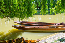 Germany, Two Punt Boats Under Green Willow Tree On Neckar River