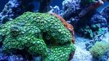 Fototapeta Fototapety do akwarium - Egipt rafa koralowa