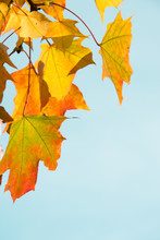 Autumn Leaves As Background. Fall Concept.