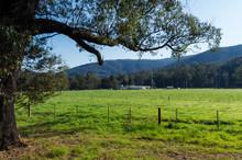 Lush Green Meadow Of A Farm Ou...