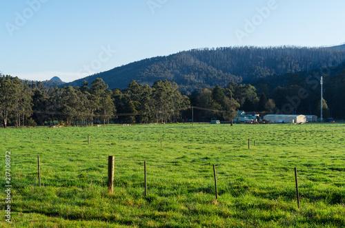 Lush green meadow of a farm outside Marysville in Australia. Tapéta, Fotótapéta