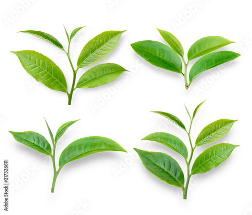 Papiers peints Condiment green tea leaf on white background