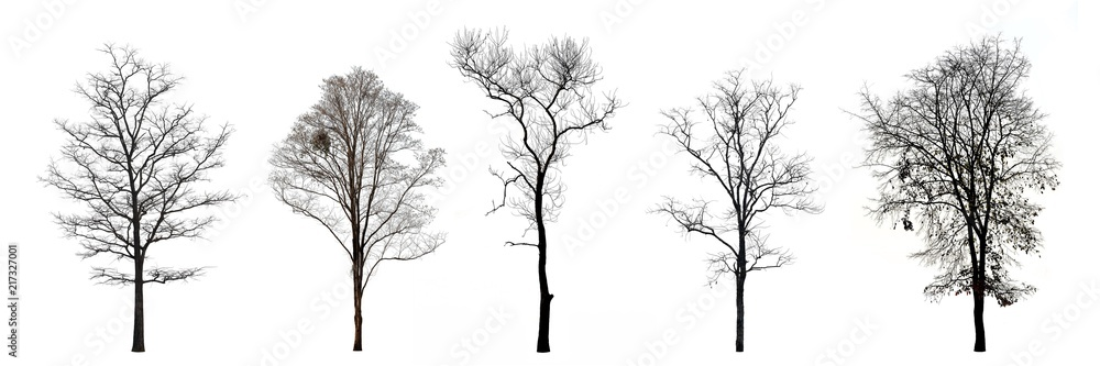 Fototapeta Collection of trees without leaves isolated on white background